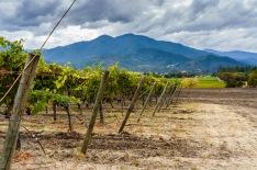 Troon Vineyard in the Applegate Valley in Oregon