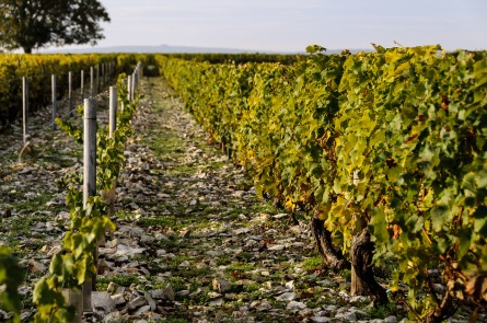 Pouilly-Fume is especially blessed with flinty soils