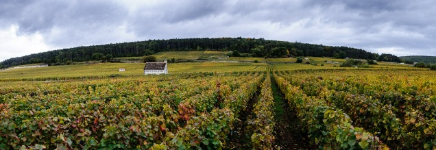 Rain just before harvest can wreak havoc.