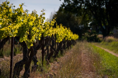 You can stay at the B&B at Domaine Rouge-Bleu, where you can walk in the vineyard any time of day.