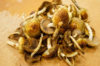 Chestnut mushrooms from R&R Cultivation