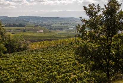 From the hill at Hermitage you can look over to the Crozes-Hermitage appellation. The flat vineyards are much less expensive to work and provide a nice, affordable introduction to the Northern Rhone