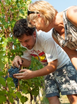 Nicola Oberto showing Julie the finer points of dropping fruit a few weeks before harvest