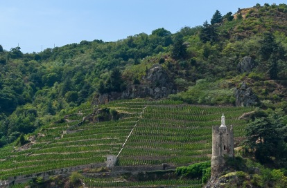 Saint Joseph vineyards are carved out of the hillside