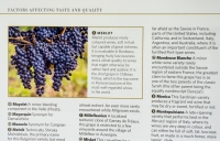 Basics on major grapes for the budding enthusiast